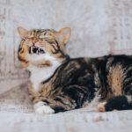 Eine Katze scheint sich unwohl zu fühlen. Katzen hassen Krach - und gehören wahrscheinlich grundsätzlich zu den Hochsensiblen.