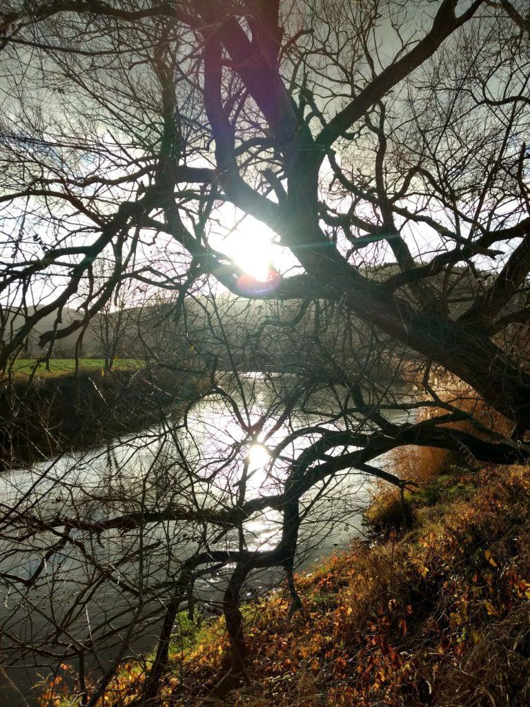 Ein Baum am Flussufer. Die Sonne scheint zwischen den Ästen durch.