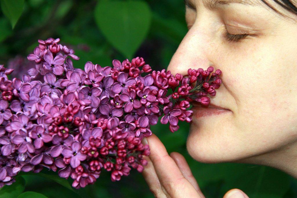 Eine Frau riecht an einer Fliederblüte - ein olfaktorisches Fest für Hochsensible!