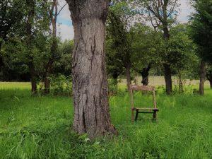 Ein Stuhl steht im Gras neben einem Baum, als Symbol dafür, wie einfach das Leben sein kann.