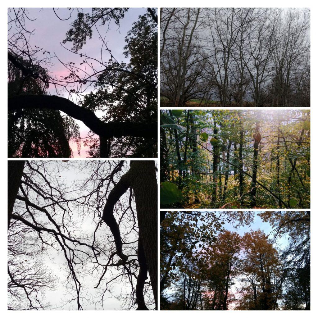 Den Wald vor lauter Bäumen nicht sehen.