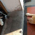 Zwei Hunde liegen sich auf einer Türschwelle gegenüber und schauen sich an.