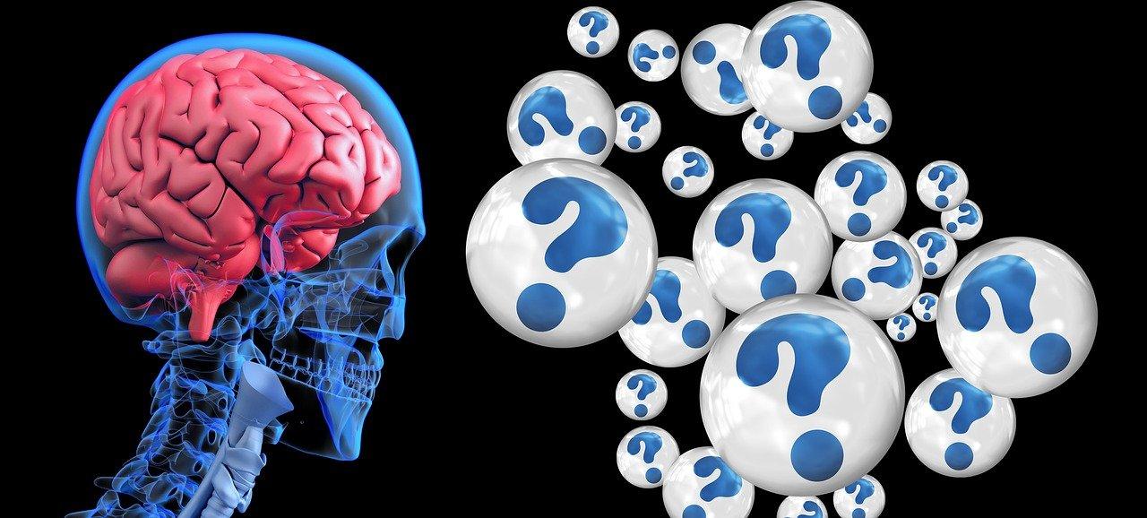 Gehirn und Fragezeichen
