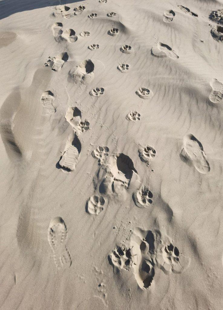 Ich bin nicht allein - auch nicht im Abschied: Fuß- und Pfotenspuren im Sand