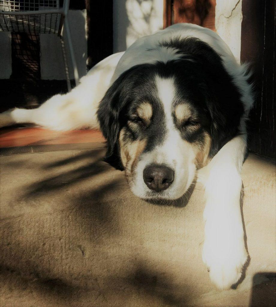 Ein dösender Hund liegt in der Sonne. Er repräsentiert Deinen inneren Schweinehund, den es in den genannten 8 Schritten kennenzulernen gilt.