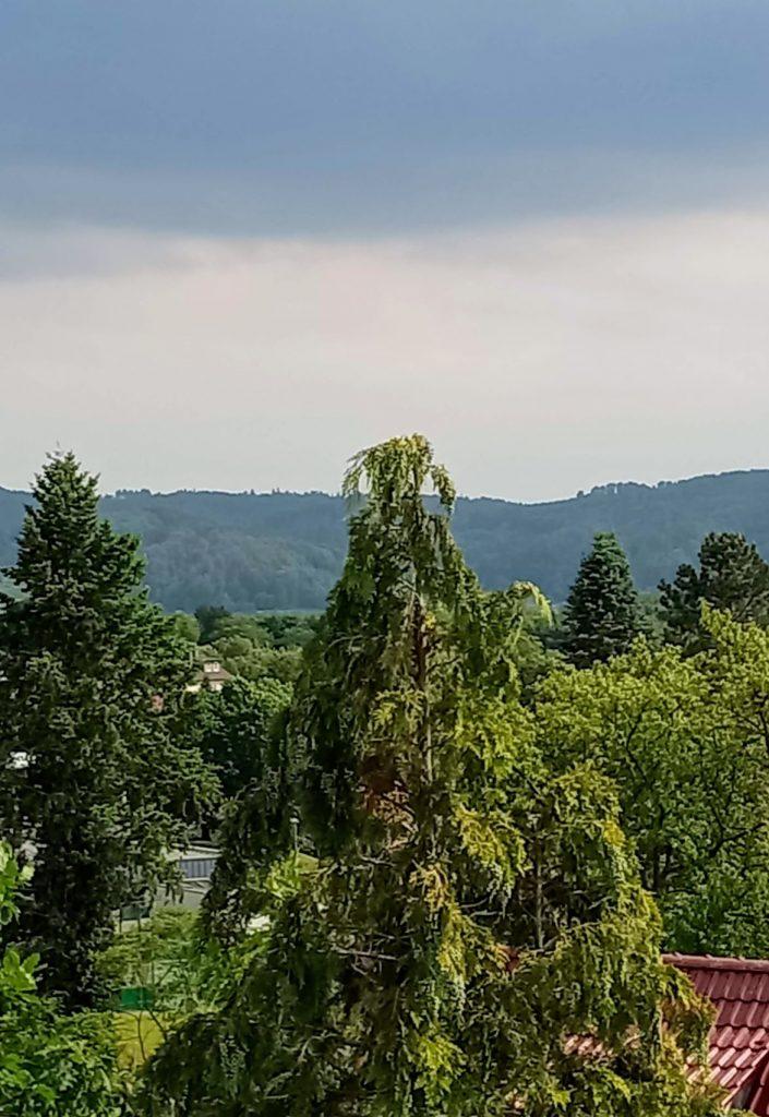 Blick auf einige Bäume und im Hintergrund die Hügel um Witzenhausen herum.