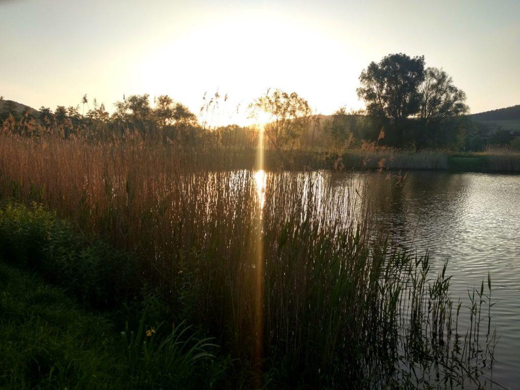 Ein von Bäumen umstandener Teich im Sonnenuntergang. Auf dem Wasser spiegeln sich die Sonne und die Bäume.