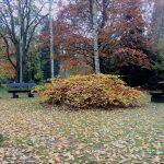 Hcchsensibilität und Trauer - zwei Bänke stehen sich gegenüber, getrennt von einem herbstlichen Busch