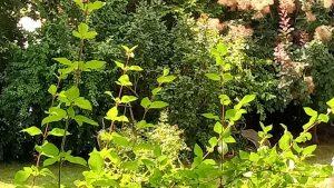 Trauerfeier organisieren im eigenen Garten kann so aussehen: Viel Grün, im Hintergrund eine Gartenliege, alles von der Sonne beschienen.