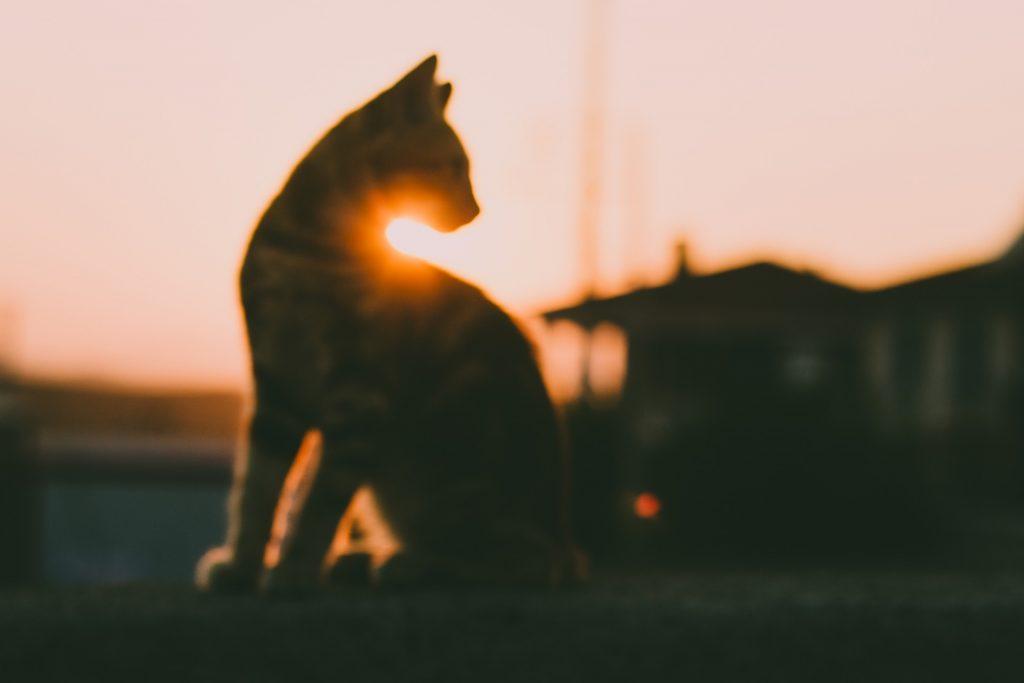 """Ein verschwommenes Foto von einer Katze vor einem Haus im Sonnenuntergang. Und die Frage: """"Wo sind meine Träume hin?"""""""
